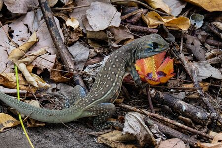 viviparous lizard: The lizard in the forest Stock Photo