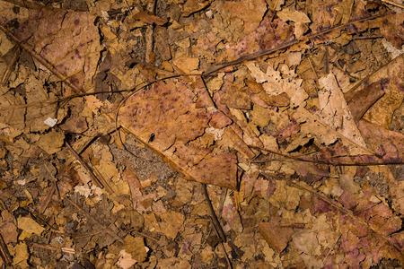 dried leaf: the dried leaf
