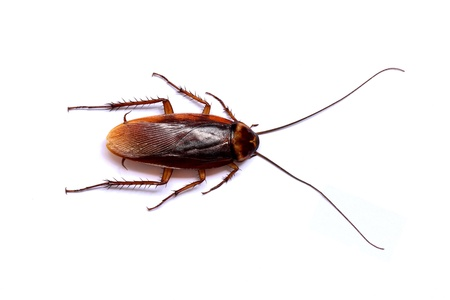 a cockroach Stock Photo