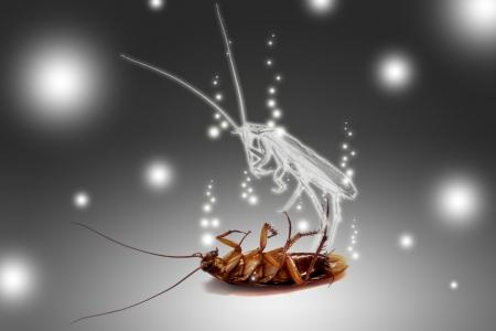 geest van een kakkerlak kwam uit zijn lichaam
