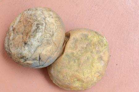 moldy: moldy bread
