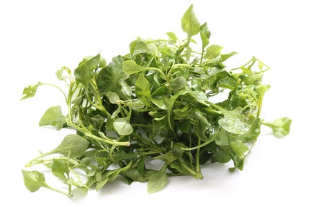 water cress: water cress Stock Photo