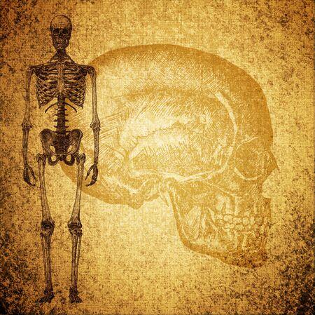 scheletro umano: superficiale disegno scheletro umano su sfondo grunge texture Archivio Fotografico