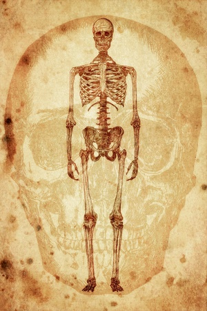 cursory drawing human skeleton on old paper background