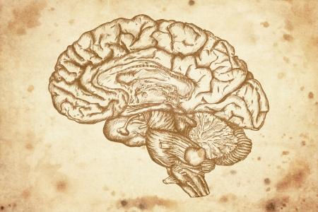 bocetos de personas: cerebro dibujo somero sobre fondo de papel viejo