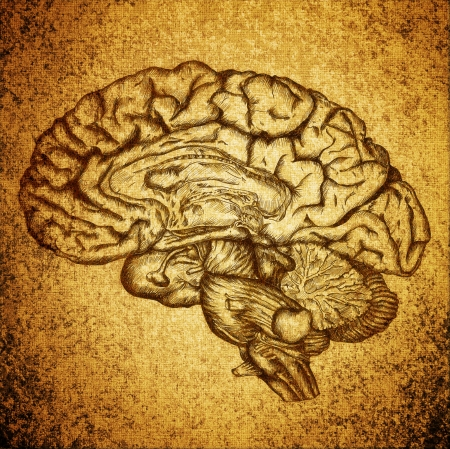 cursory drawing brain on grunge texture background photo