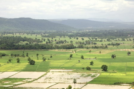 countrified: paddy field : countrified landscape in Thailand