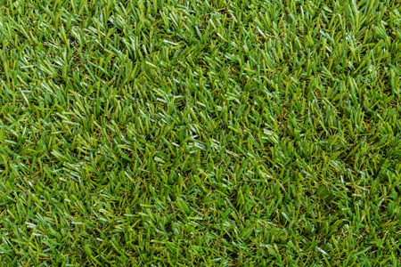 Green grass texture background of a field.