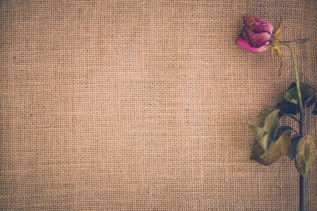 withered flower: Withered Flower Background Stock Photo