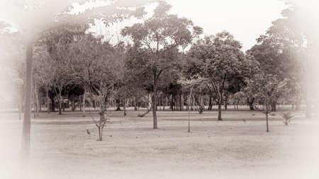 vintage background: Vintage Forest Background, HDR Stock Photo