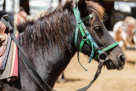 side shot: Side Shot of Horse Portrait