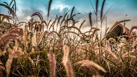 hdr: Grass Field at Dusk, HDR