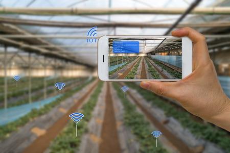 IOT, 증강 현실, AR 및 스마트 장치를 이용한 스마트 농업 농업 개념 스톡 콘텐츠