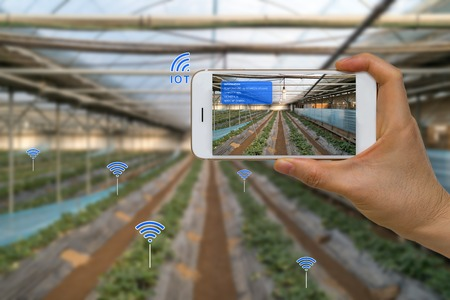 Smart Farming Agriculture Concept Using Internet of Things, IOT, and Augmented Reality, AR, and Smart Device
