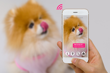 Augmented Reality of Pet Microchip App on Smartphone Screen IOT Concept Foto de archivo
