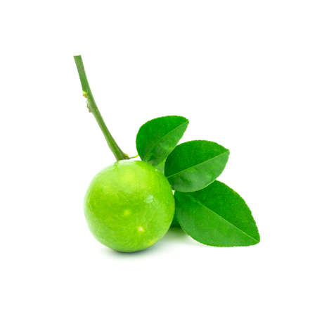 fresh lime. Green leaf lime isolated on white background.