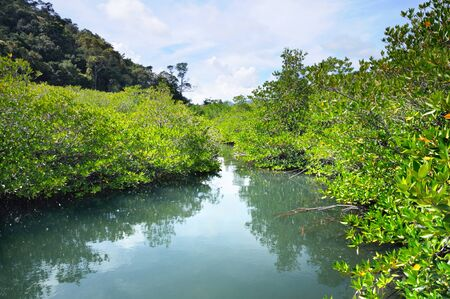 Mangrove forest at the Koh Chang island, Thailand. Stock Photo
