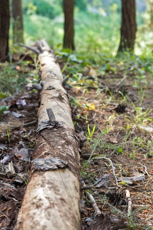 Photo rotten wood lying on the forest floor. photo