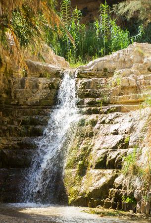 gedi: Ein Gedi spring in the Dead Sea area, Israel