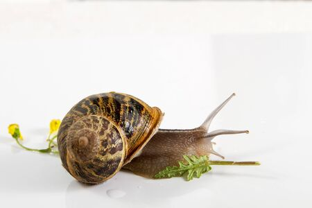 Beautiful photo snail isolated on white background. photo