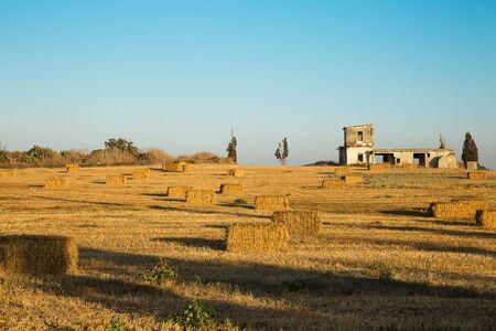 Beveled wheat field at sunset, haystacks . Foto de archivo - 132109985