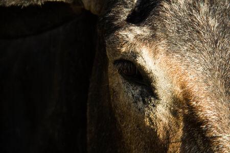 primer plano cara: Cerca de cara de animal lindo en Khonkean zool�gico, Khonkean, Tailandia