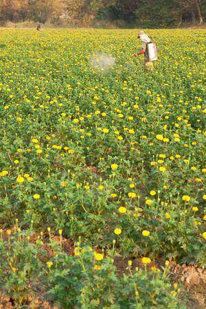 breen: Flower plant.