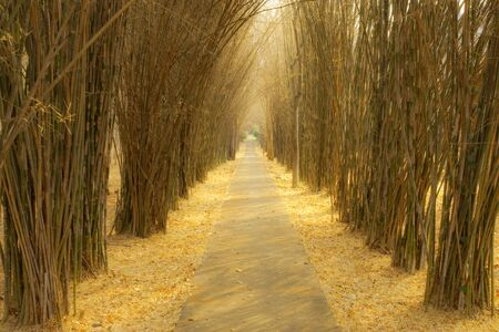 Path in bamboo forest. photo