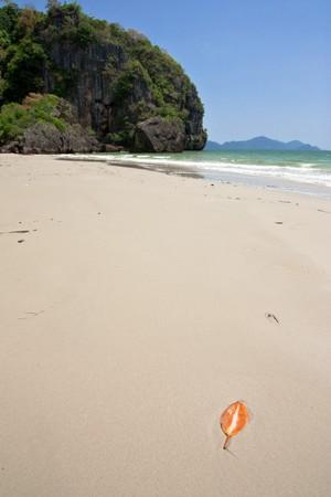 Leaf on beach, Trang province, Thailand photo