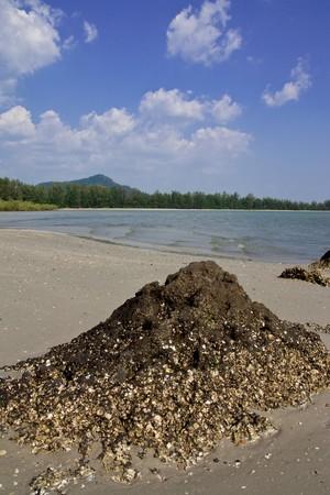 Chao Mai beach, Thailand photo