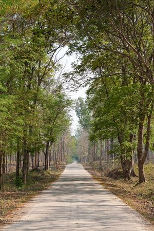 Road in tropical forest, Thailand photo