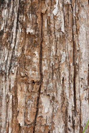 Texture of old tree peel photo