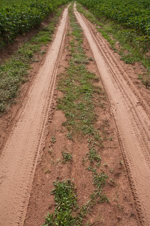 Off-road track Stock Photo - 4869489
