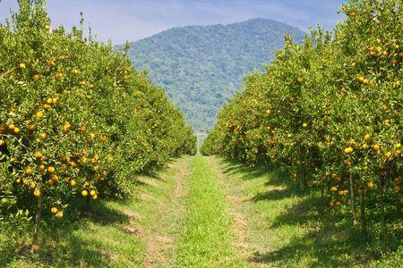 Oranje tuin in ten noorden van Thailand