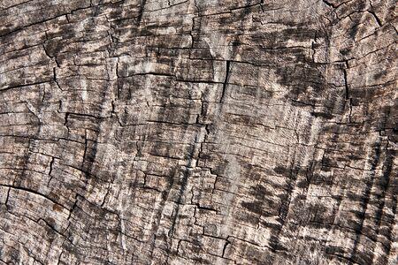 Texture of old teak wood photo