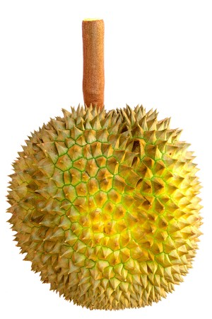 Durian, king of tropical fruit photo