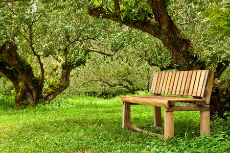 Wood bench in forest photo