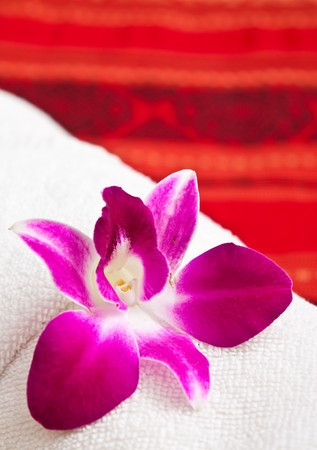 thai orchid: Cattleya orchid on native Thai style cloth Stock Photo