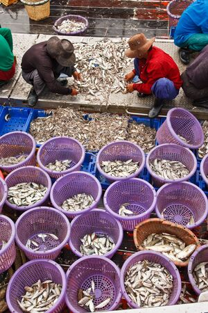 Fishermen sorting fish in port, taken in south of Thailand Stock Photo - 8461254