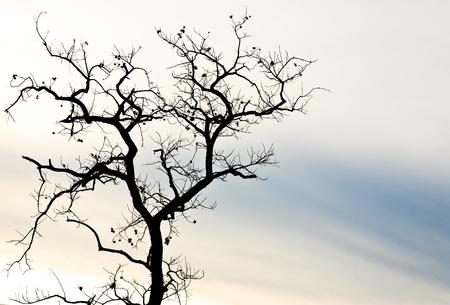 bare: Dead tree