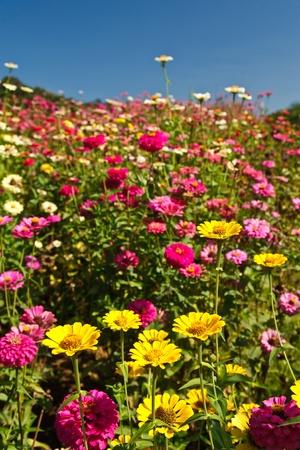 Tropical flower field photo