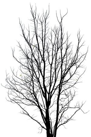arboles secos: Patter en muri� �rbol