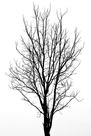 arbre mort: Motif de l'arbre mort Banque d'images