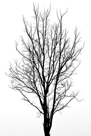 Pattern of dead tree Stock Photo
