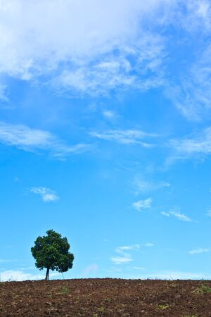 Jackfruit and blue sky photo