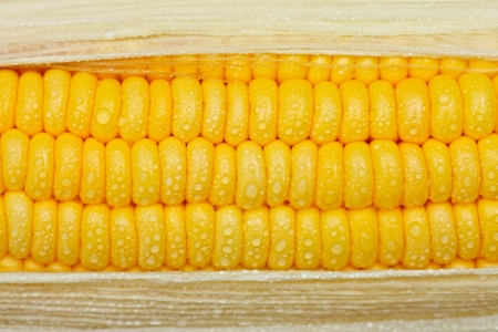 Drop of waters on corn Stock Photo - 10336653