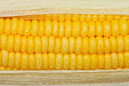 water's: Drop of waters on corn Stock Photo