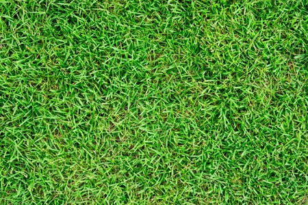 green grass Stock Photo - 11018229