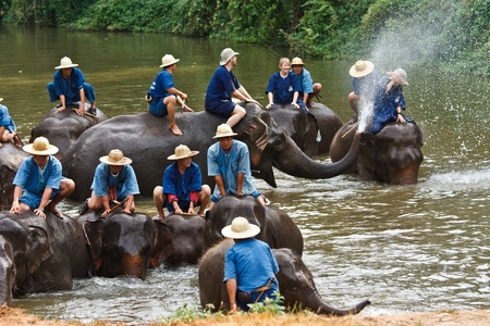 Elephants bathing in  The Thai Elephant Conservation Center (TECC), Lampang, Thailand