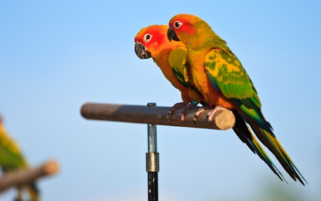 Macaw birds Stock Photo - 11954763